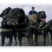 Wattenfischerei mit Hundeschlitten