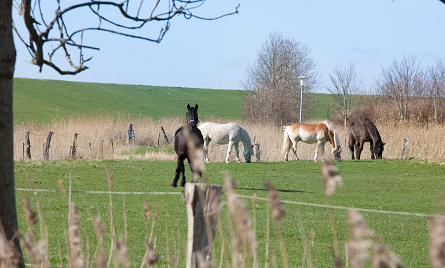 Ferienwohnung_24_Pferde