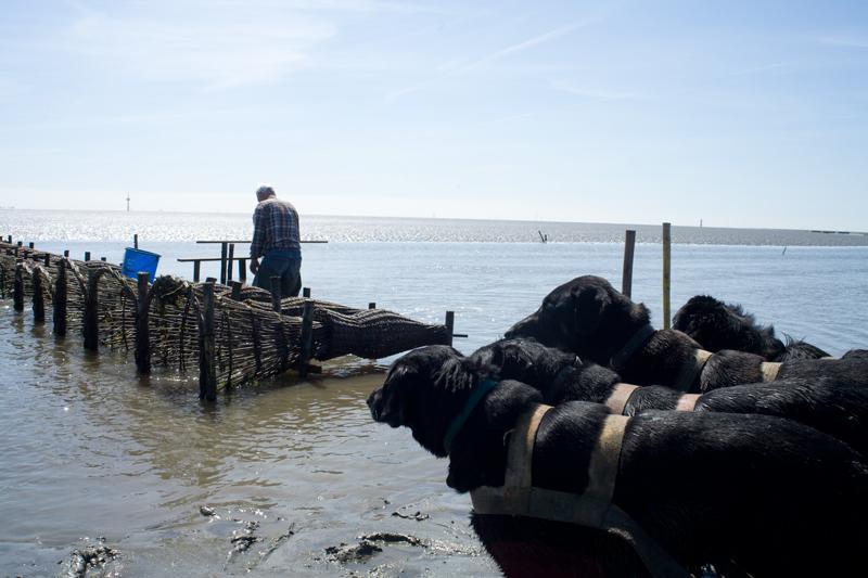 Fischer ohne Netz_10