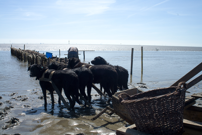 Fischer ohne Netz_12